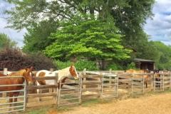 Feeding Stalls